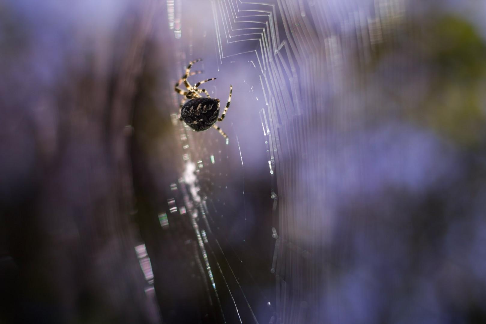 Spinne Nahaufnahme, Unscharfer Hintergrund, Bokeh