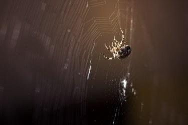 Makro – Spinne
