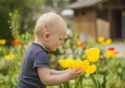 2-Jähriger bestaunt gelbe Tulpe, Nahaufnahme
